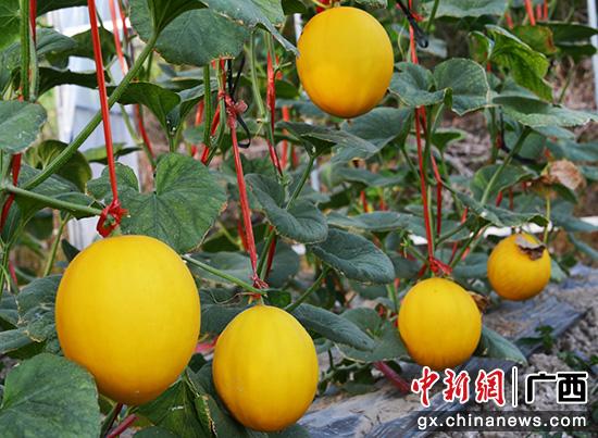 桂林灵川县赤江村壮大村集体经济走上致富路