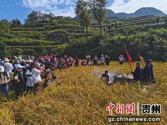 """五古稻""""新米节""""祭祀活动引摄影爱好者关注"""