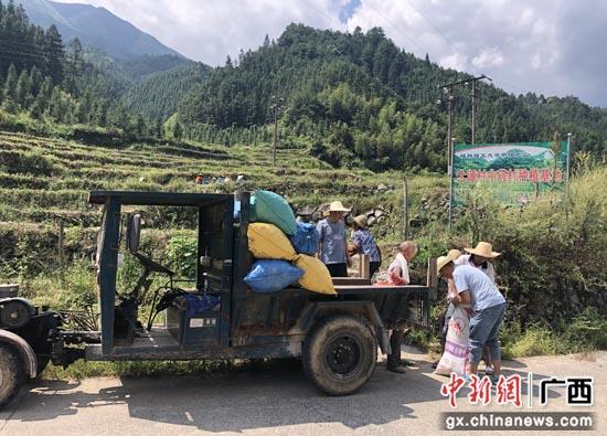 桂林灌阳县大源村集体经济花繁果硕 乡村振兴信心满怀