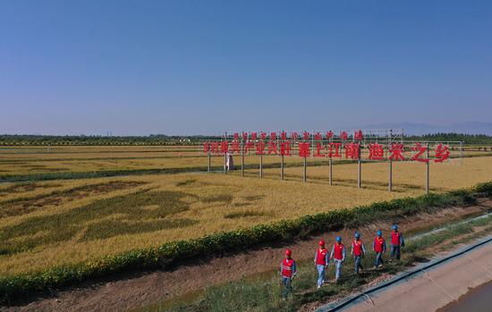 """银川供电部门为宁夏""""2021年中国农民丰收节""""保电护航"""