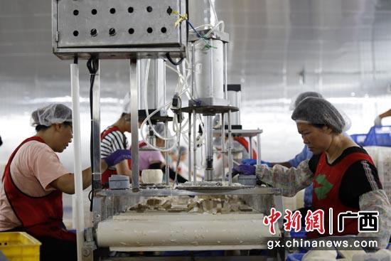 广西荔浦:小小芋头铺出致富路
