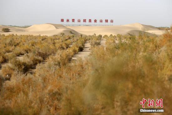 新疆麦盖提县在沙漠中筑起绿色生态屏障