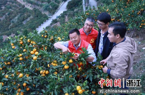 蜜橘种植指导  叶露 提供