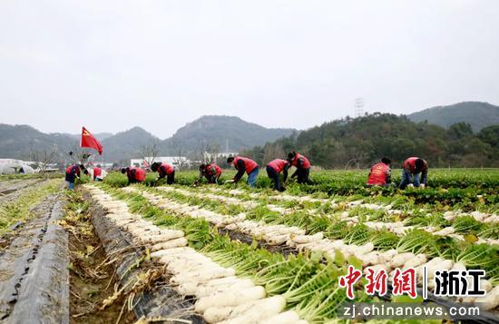 蔬菜采收  叶露 提供