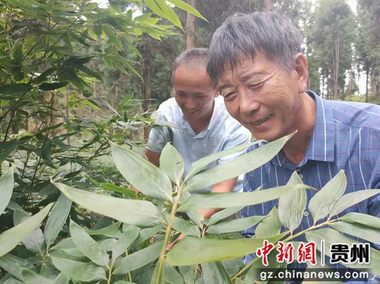 癌症患者张治权:21载荒山坚守 已植树栽竹五百六十多万株