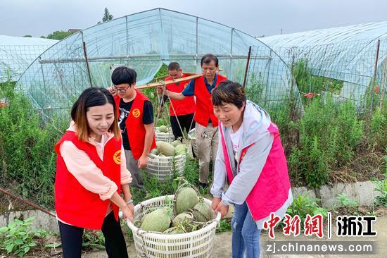 长兴县党群创业互助会帮助农户采摘  李永超 摄