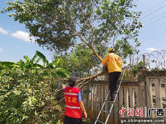 玉林工务段在台风期间加强沿线防护栅栏和危树危竹的检查排查,及时发现和处理影响行车安全的隐患,保障铁路运输安全。谭育俊  摄