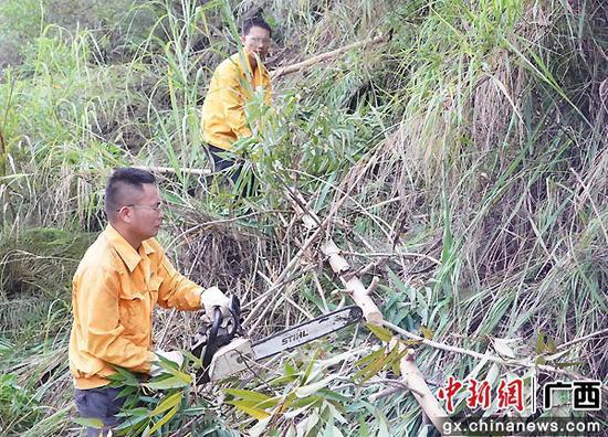 玉林工务段组织职工在台风期间加强线路两侧的危树砍伐清理,确保线路安全畅通。谭育俊  摄