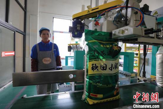 贵州贵定:大米生产忙