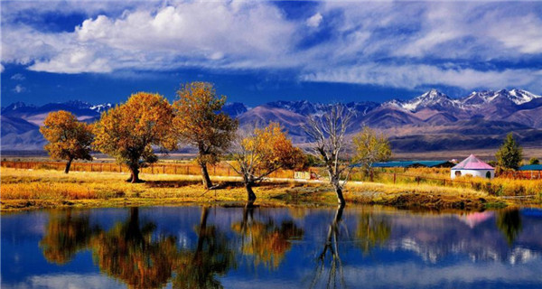 Euphrates poplar trees form a stunning view