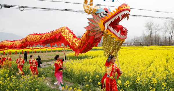 Cole flowers in full bloom in Hanzhong, Shaanxi Province